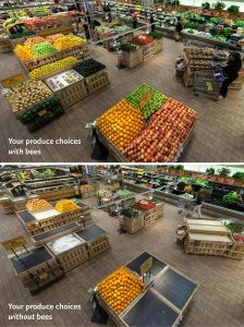 Grocery Store Without Bees: Problem with GMOs